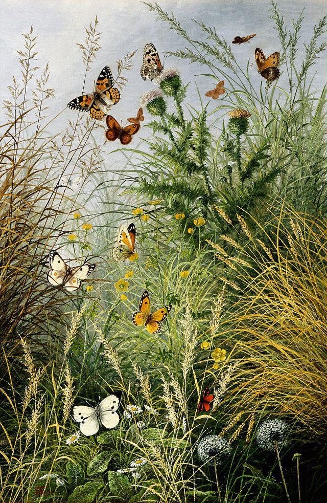 the butterflies haunt dandelion clocks and thistles by william scott myles photo by © fine art photographic librarycorbiscorbis via getty images