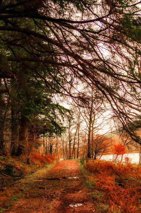 Tree, Natural landscape, Nature, Forest, Natural environment, Woodland, Vegetation, Branch, Dirt road, Leaf,