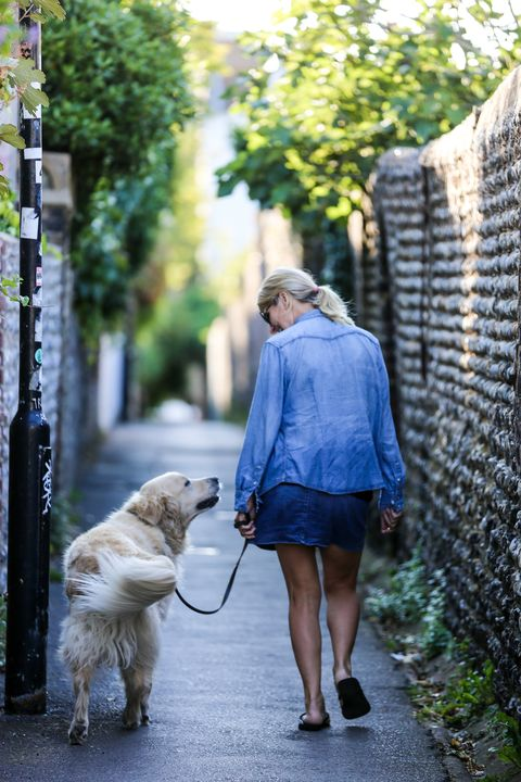 Photograph, Dog, Street fashion, Walking, Snapshot, Yellow, Canidae, Dog walking, Leash, Street,