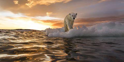 Polar bear, Sky, Bear, Ice, Sea ice, Wave, Ocean, Iceberg, Arctic, Sea,