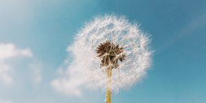 Why your hay fever is next level this year