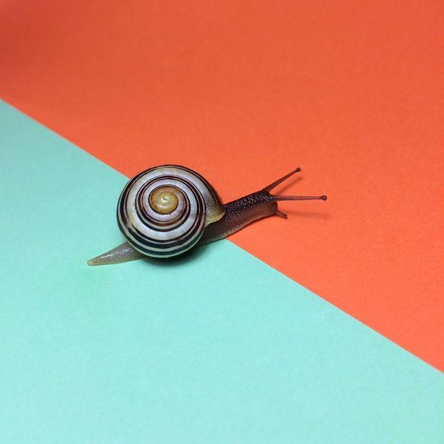 snail mucin