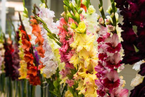 Flower, Floristry, Gladiolus, Plant, Cut flowers, Flower Arranging, Floral design, Flowering plant, Petal, Spring,