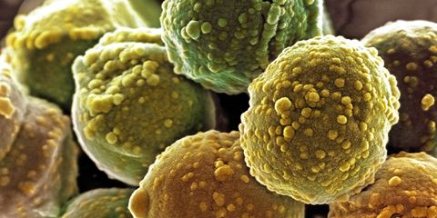 Plant, Food, Pollen,