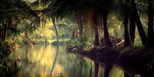 Scenic view of backwaters with Reflection Of Trees On Water