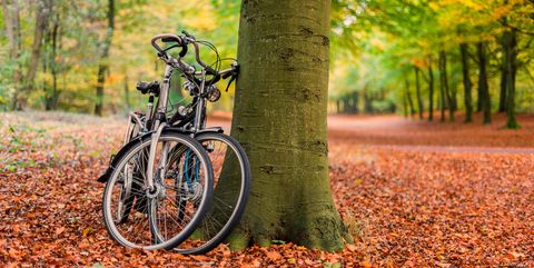 Bicycles against tree in autumn forest