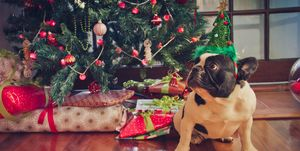 French Bulldog in front of Christmas Tree