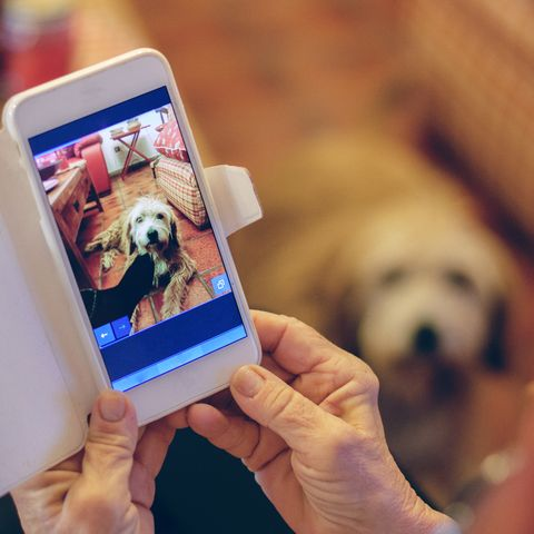 Woman photographing her pet with smartphone