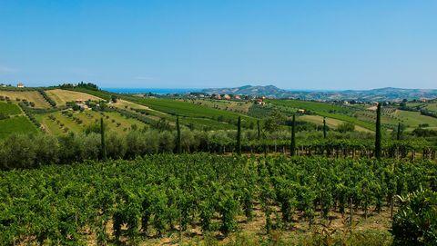 Vegetation, Agriculture, Vineyard, Field, Hill, Land lot, Natural landscape, Hill station, Sky, Rural area,