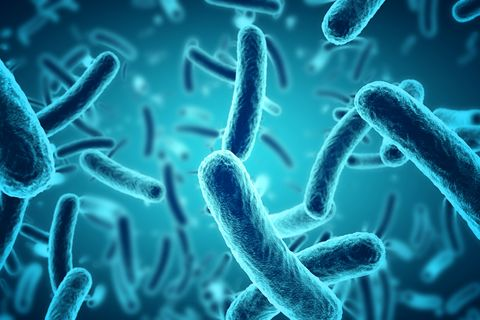 Bacteria close-up