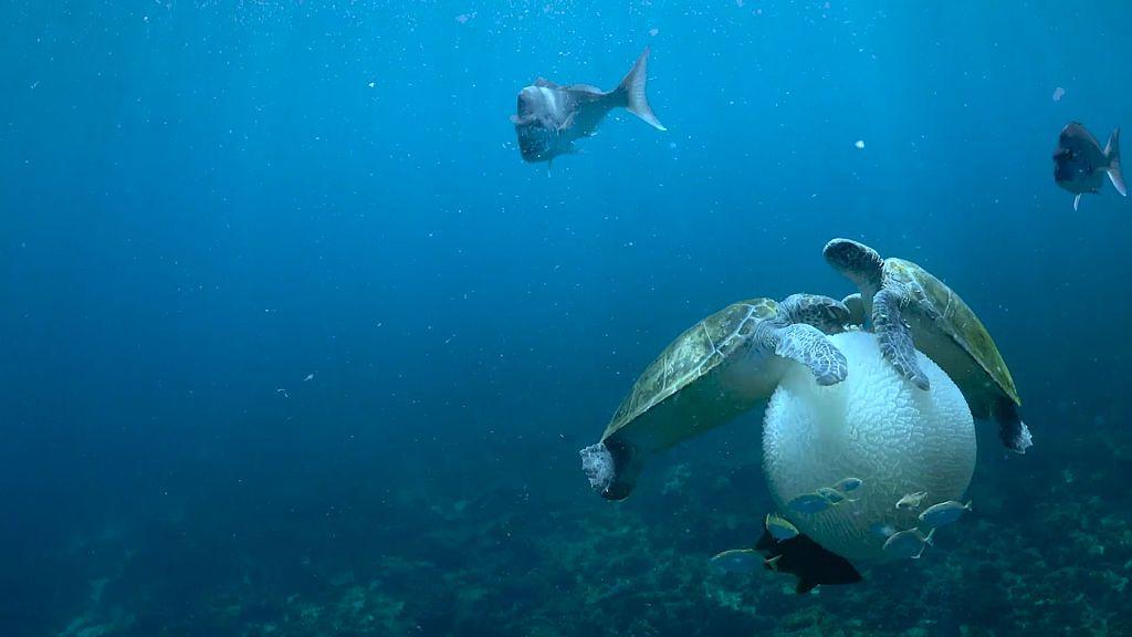 ¿Cuándo evolucionó la vida en el mar?