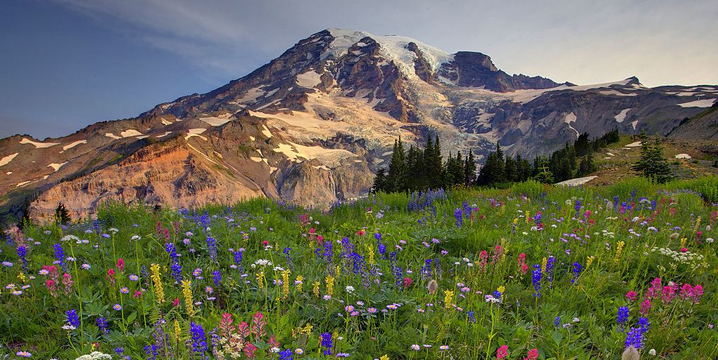 Mount Rainier National Park Is About to Get An Insane Wildflower Bloom