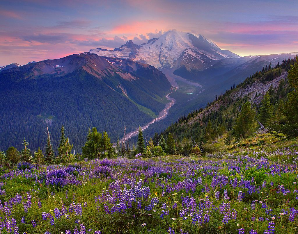 Mount Rainier National Park Is About to Get An Insane Wildflower Bloom So Plan Your Trip ASAP