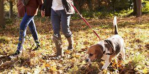 Couple Exercising Dog In Autumn Woodland