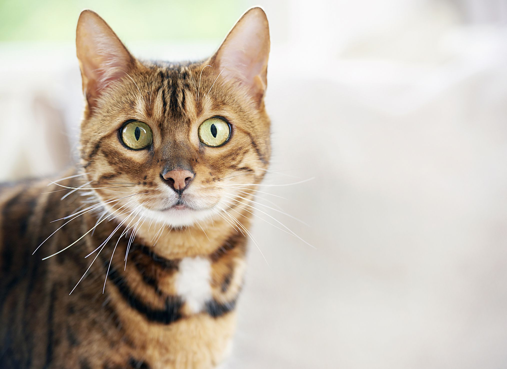 The 10 most popular female cat names of 2019 revealed