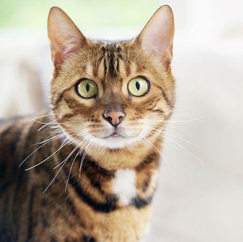 cat looking alert