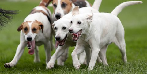 Dog, Mammal, Vertebrate, Dog breed, Canidae, Carnivore, Companion dog, Parson russell terrier, Snout, Sporting Group,