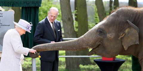 queen elizabeth with an elephant