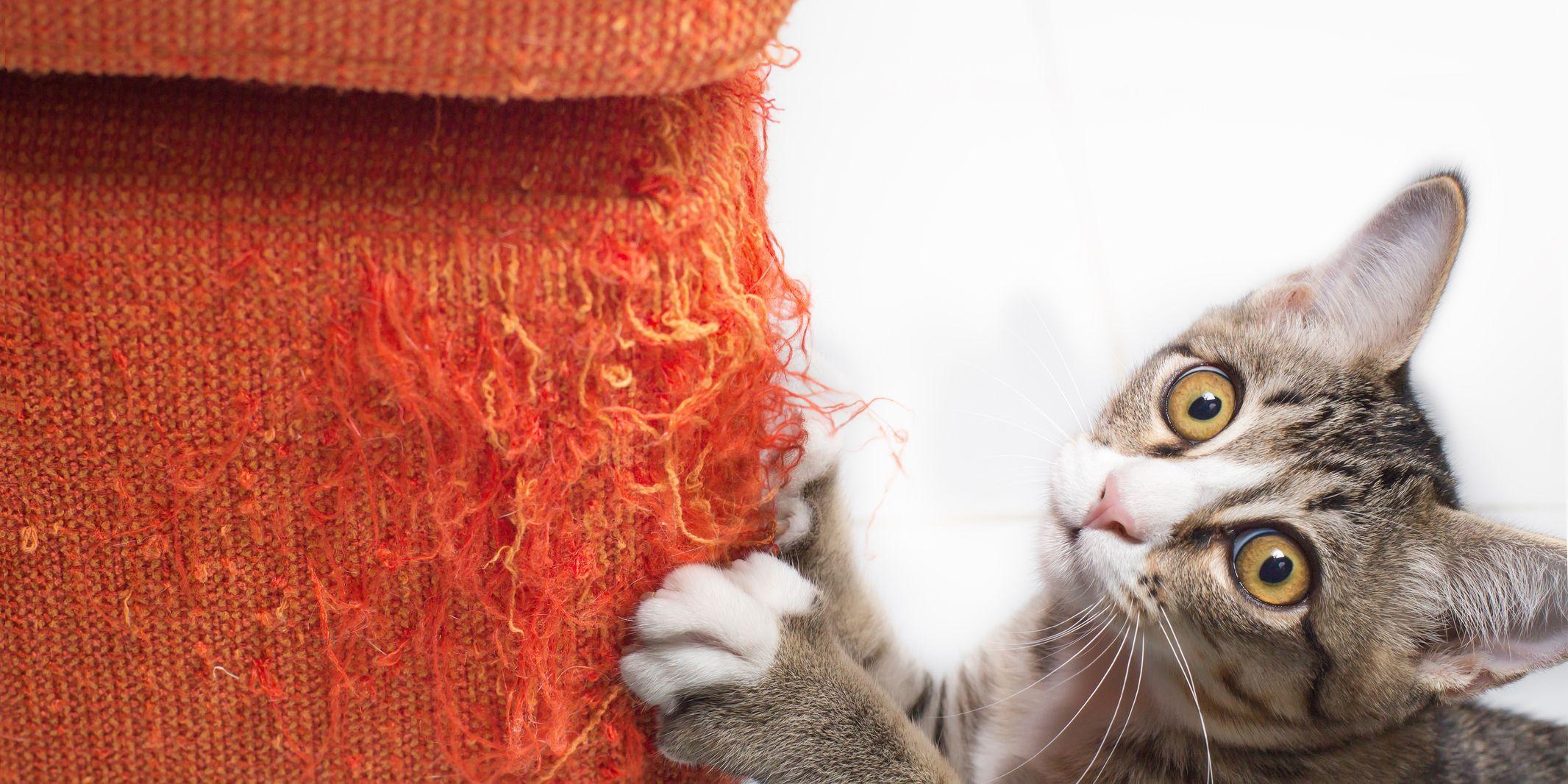 Dit is waarom je kat aan je meubels krabt