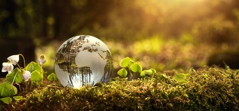Nature, Ball, Green, Grass, Natural landscape, Sphere, Sunlight, Photography, Plant, Macro photography,