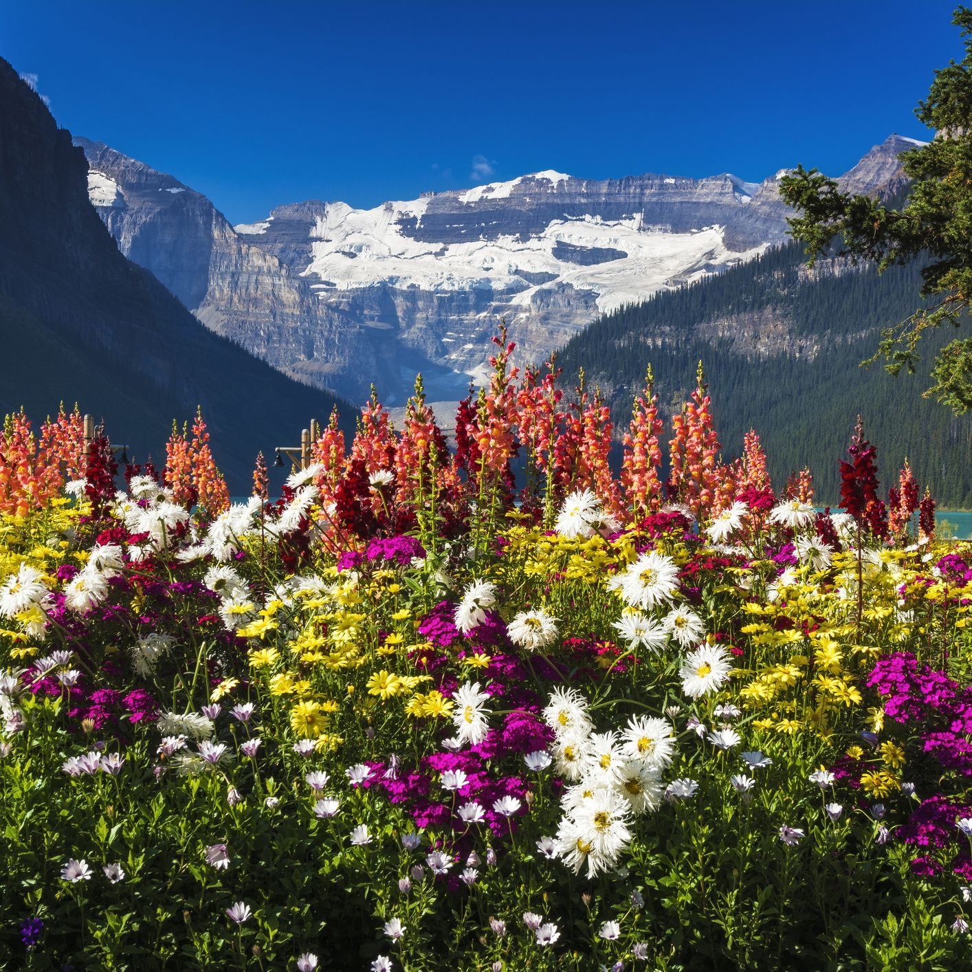 Canada to California Spring Flowers