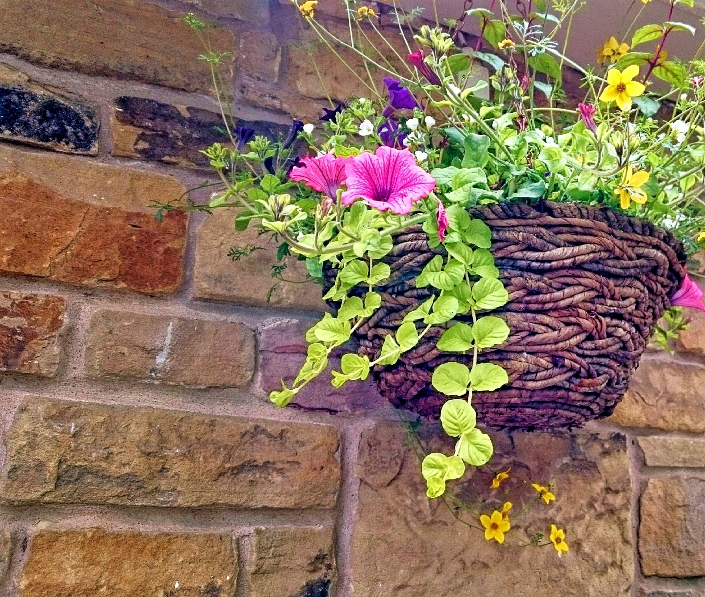 Hanging Garden Advice How To Create Your Own Hanging Garden