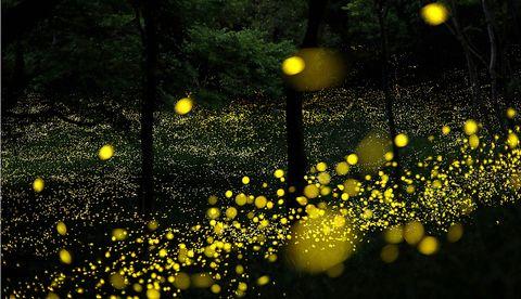 Nature, Yellow, Water, Night, Lighting, Tree, Street light, Plant, Photography, Branch,