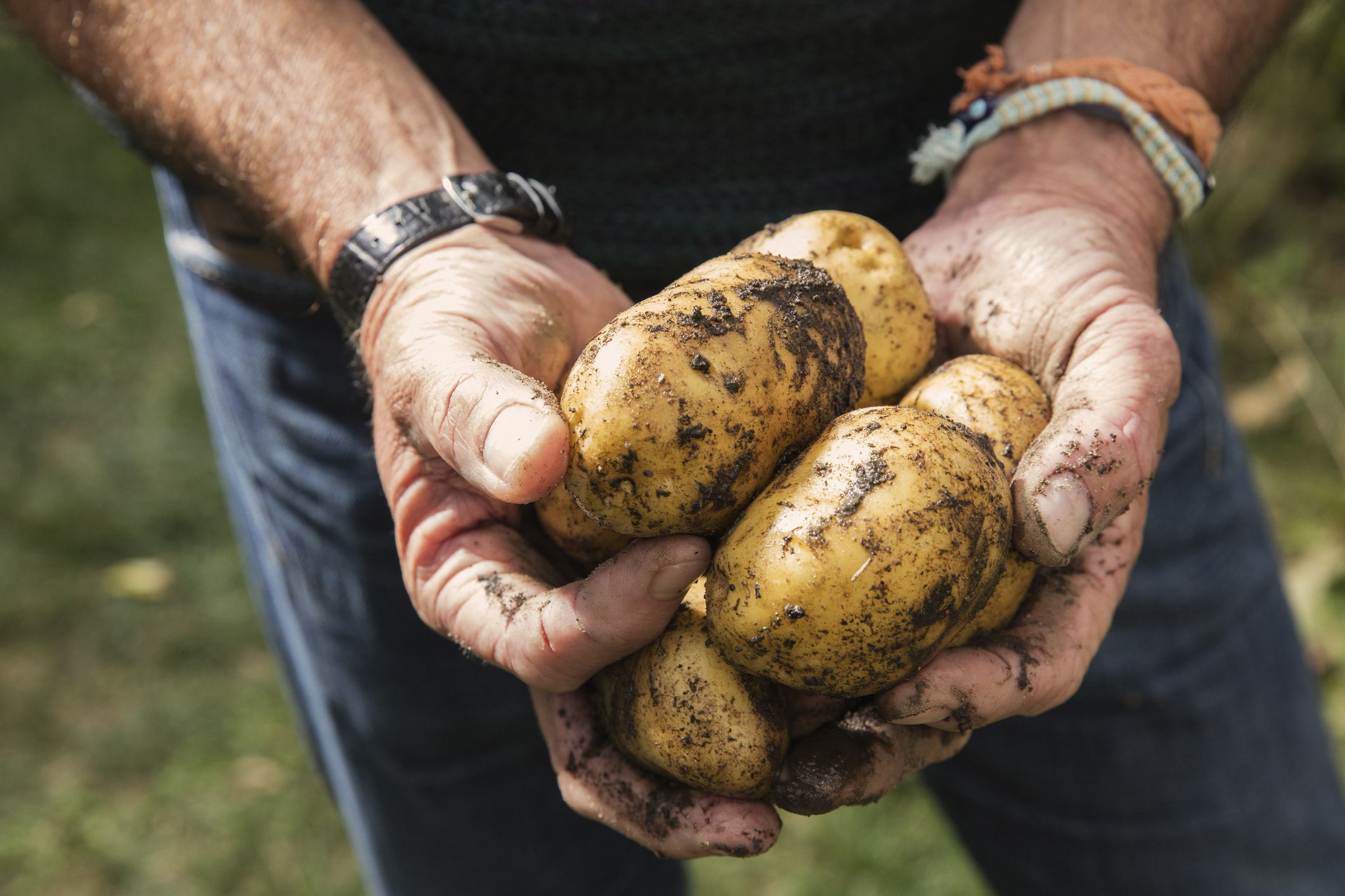 Why Potatoes Are Actually Good for You