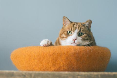 Diy: 4 ikea hacks waar je je kat heel blij mee maakt