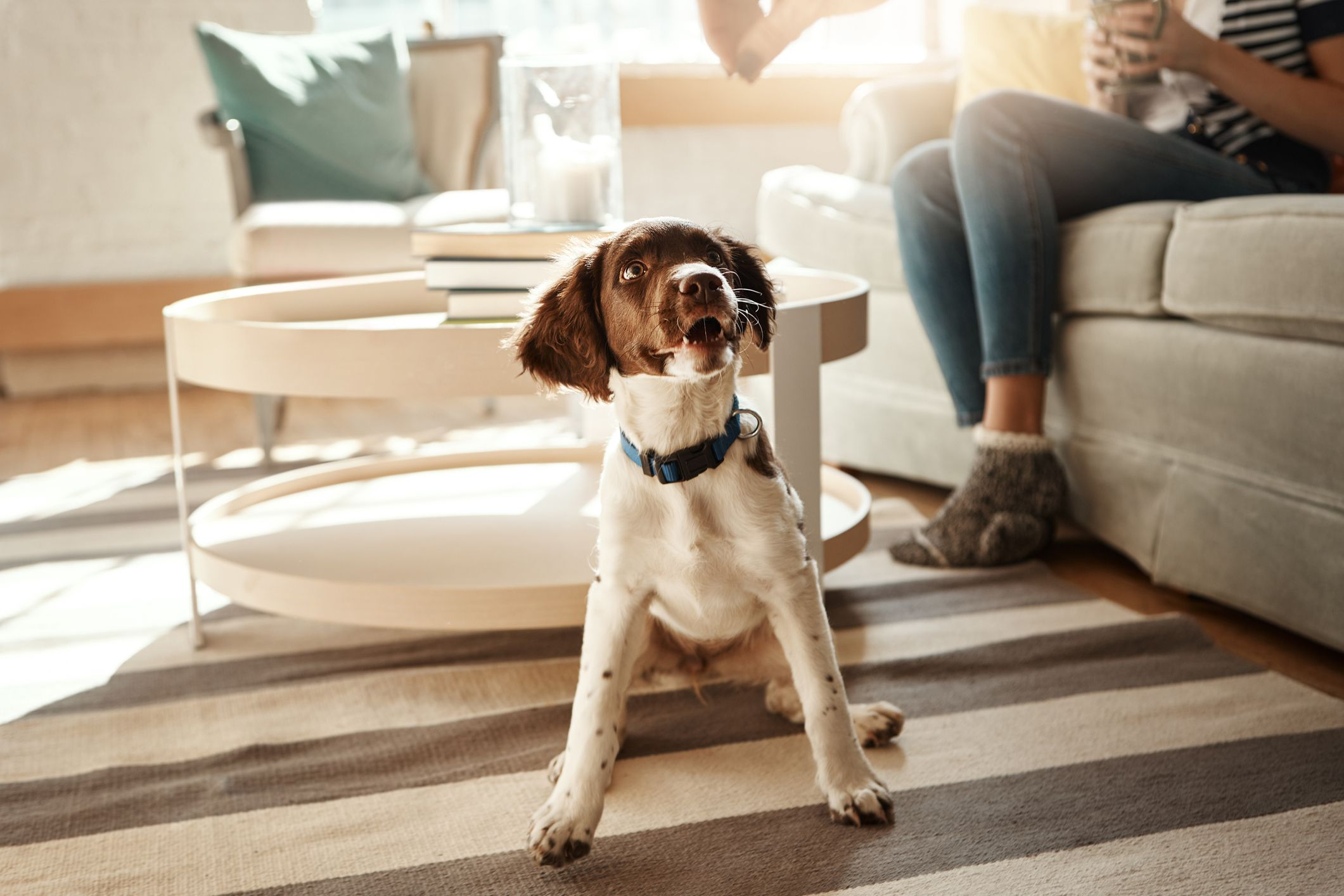 Dog owner shares brilliant hack to remove pet hair from carpets