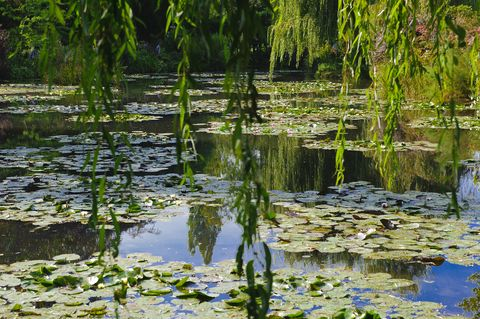 France. Normandy. Eure. Giverny. Garden of Claude Monets house. The pond in white water lilies