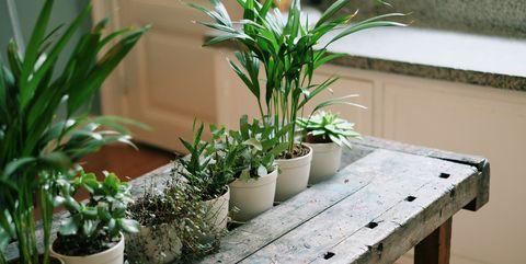 Flowerpot, Houseplant, Plant, Herb, Bench, Flower, Room, Furniture, Table, Garden,