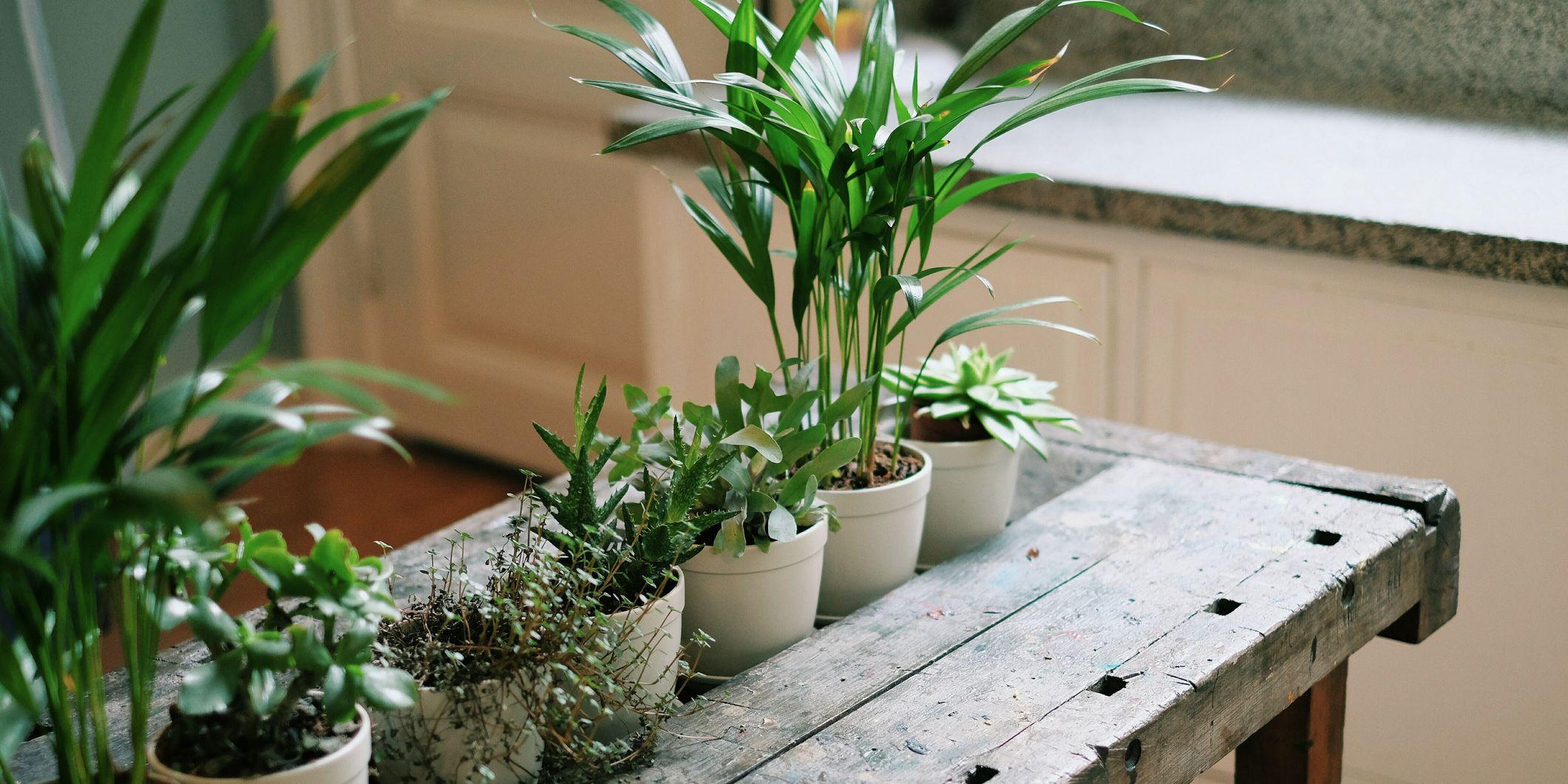 Planten dood laten gaan - met dit handboek gaan je planten niet meer dood