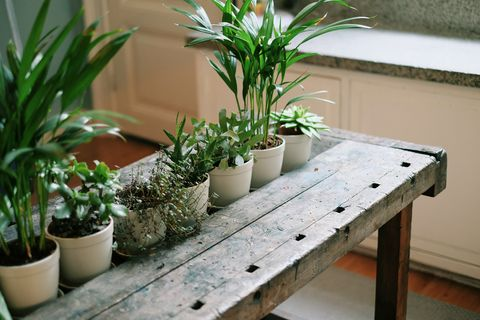 Flowerpot, Plant, Interior design, Houseplant, Herb, Annual plant, Plant stem, Herbaceous plant, Pottery, Subshrub,