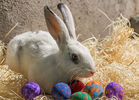 Domestic rabbit, Rabbit, Rabbits and Hares, Easter egg, Easter bunny, Hare, Easter, Grass, Hay, wood rabbit,