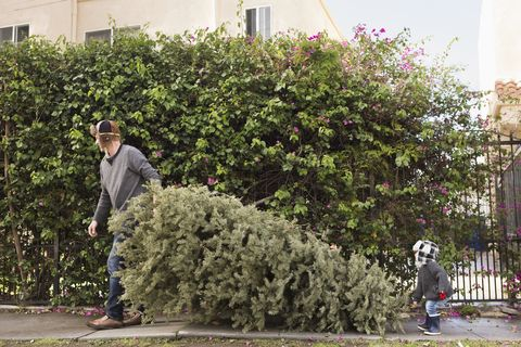 father and son carrying pine tree - Best Smelling Christmas Tree