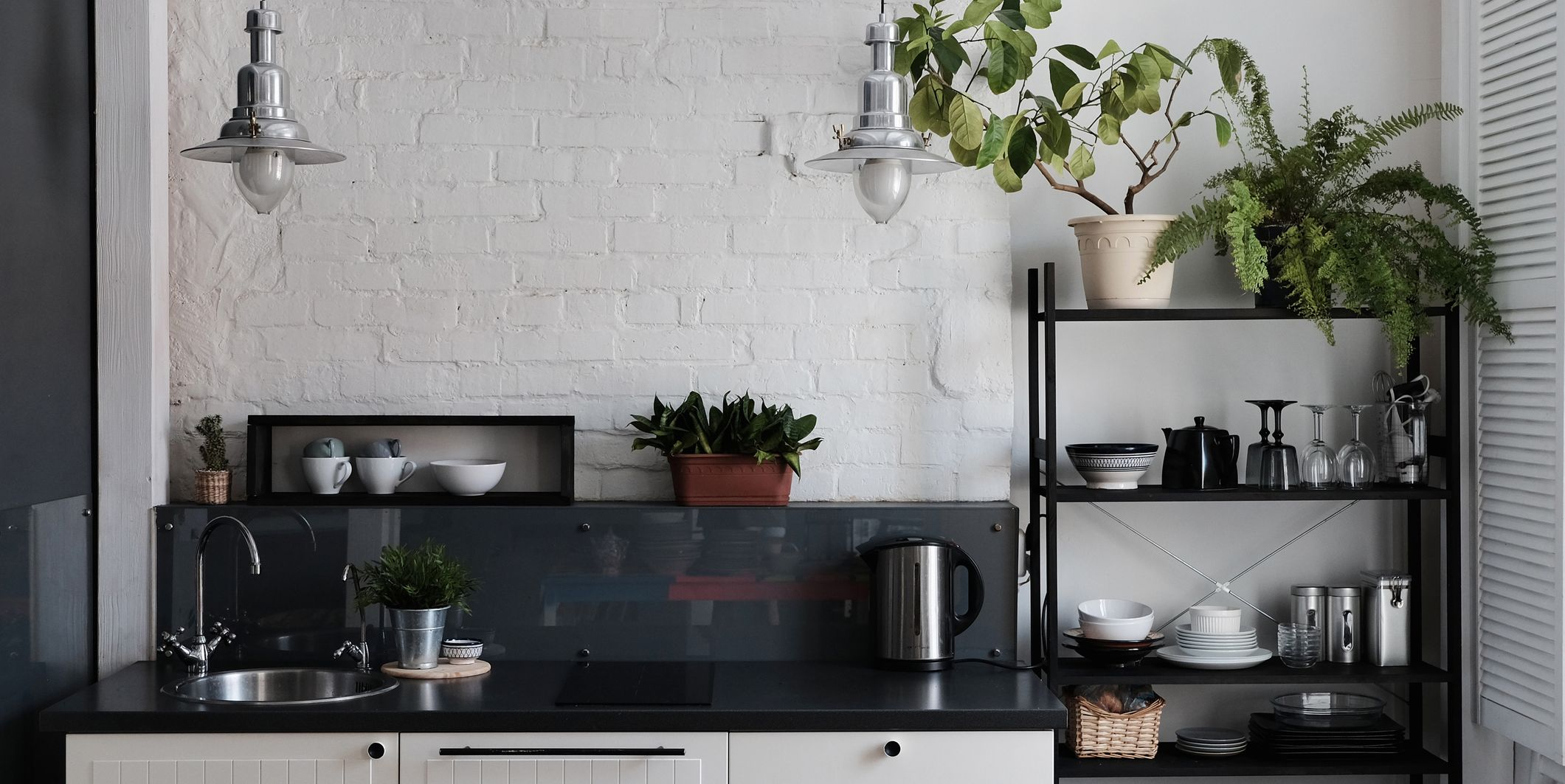 THE BEST PLANT TO BUY FOR EVERY ROOM IN YOUR HOME