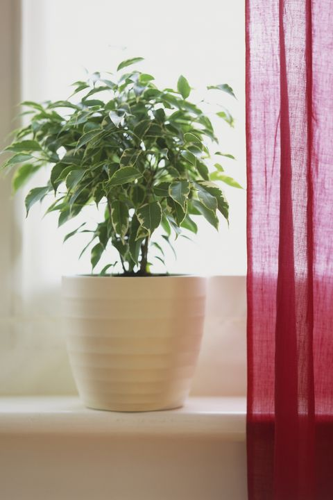 30 Houseplants That Can Survive Low Light Best Indoor Low Light Plants