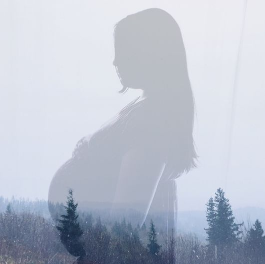 a transparent silhouette of a pregnant woman standing above a field of trees