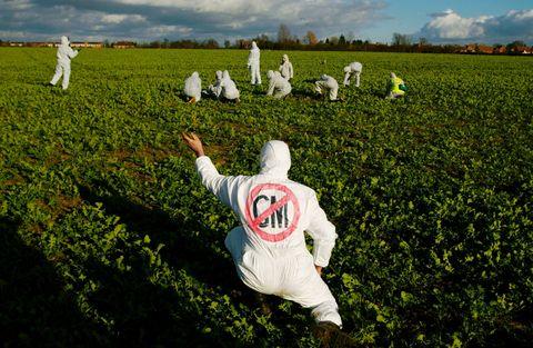 White, Field, Green, Grass, Crop, Farm, Agriculture, Plant, Grass family, Cash crop,