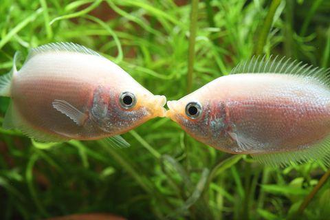Fish, Fish, Organism, Close-up, Tail, Grass, Adaptation, Feeder fish, Bony-fish, Freshwater aquarium,