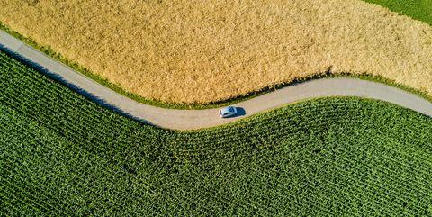 Grass, Artificial turf, Lawn, Grass family, Plant, Sport venue, Golf course, Land lot, Fodder,