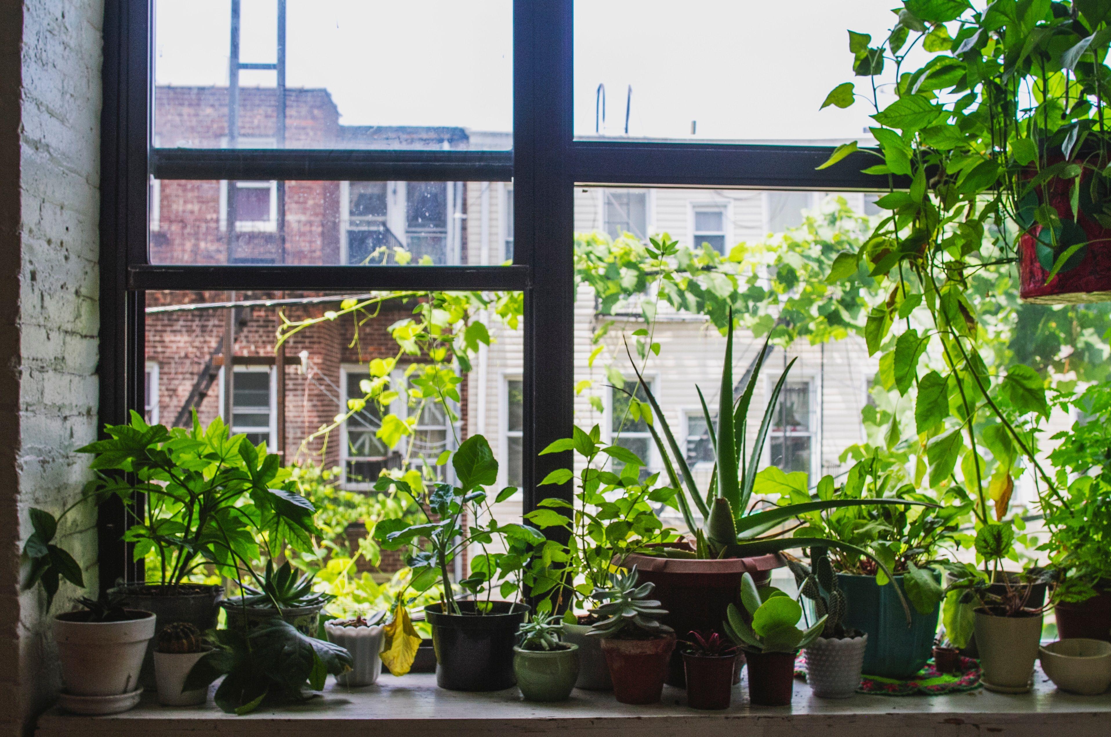 Come smettere di uccidere tutte le piante che hai in casa