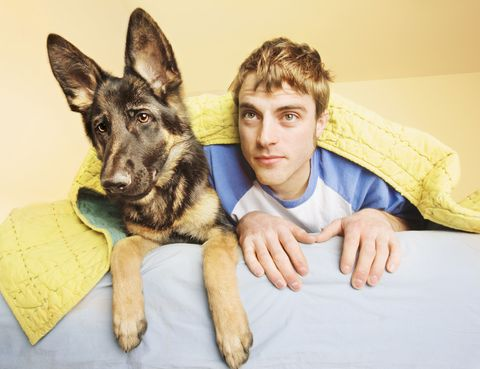 Dog, Mammal, Canidae, German shepherd dog, Dog breed, Carnivore, Ear, Kunming wolfdog, East-european shepherd, King shepherd,