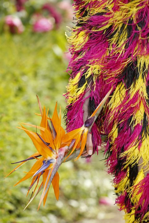 Magenta, Petal, Colorfulness, Botany, Flowering plant, Wildflower, Herbaceous plant, Annual plant, Plant stem, Natural material,