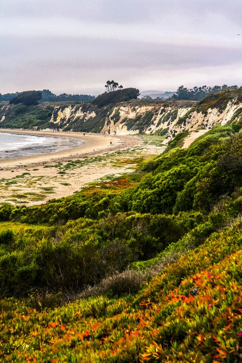 Nature, Coast, Vegetation, Sky, Wildflower, Shore, Sea, Headland, Natural environment, Wilderness,