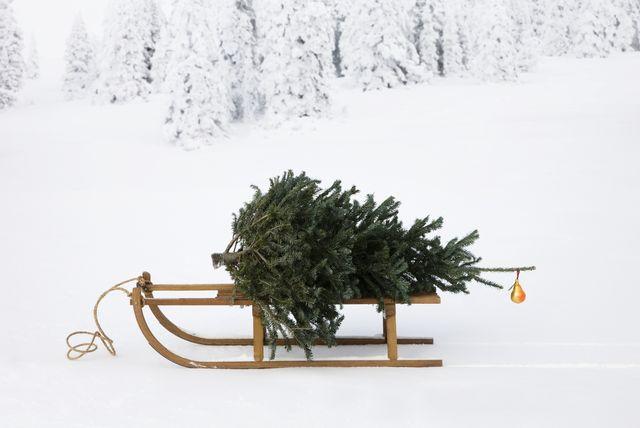 kerstboom langer mee