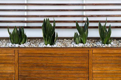 Green, Plant, Houseplant, Wall, Flower, Botany, Grass family, Flowerpot, Wood, Grass,