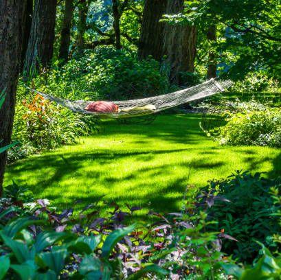 a hammock in a sunlit setting in the garden
