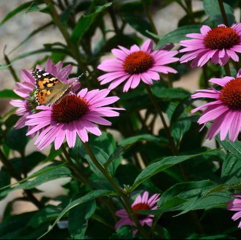 These $7 Flowers Will Attract Goldfinches to Your Yard